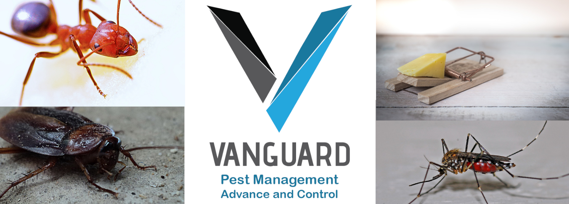 Vanguard Pest Management Header